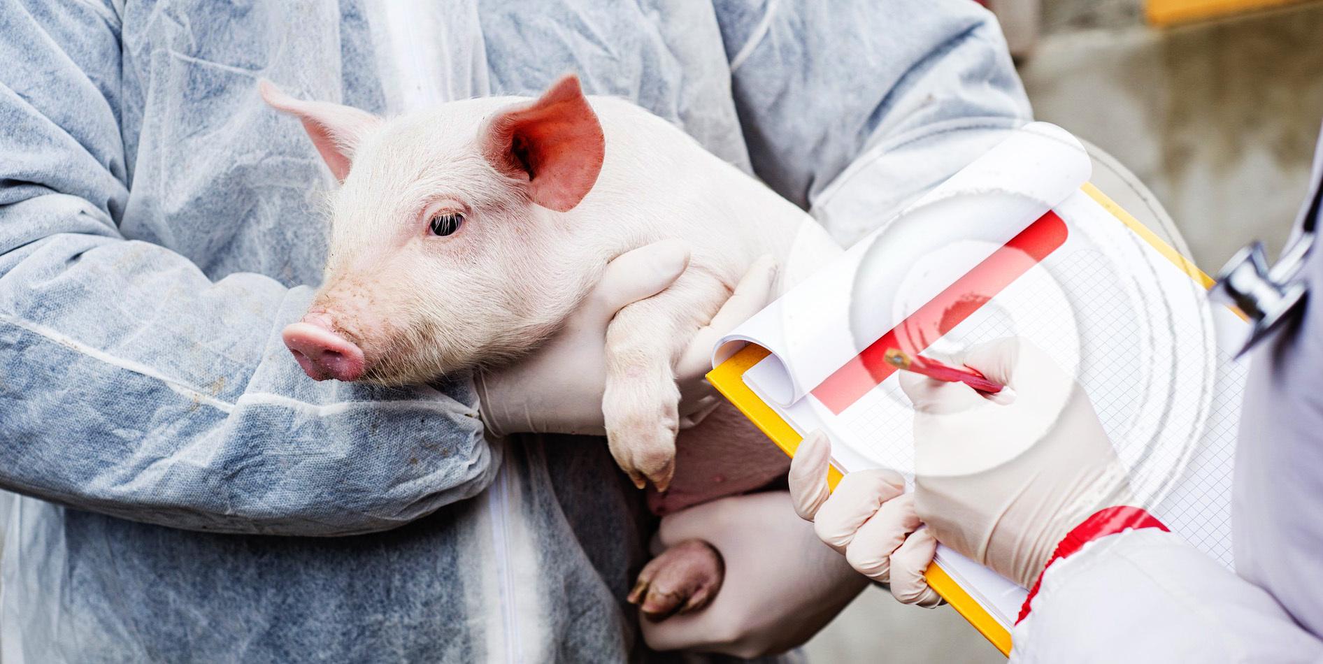 AVEPOMUR Asociación de Veterinarios de Porcino de Murcia